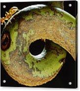 Carpenter Ant Camponotus Schmtzi Acrylic Print