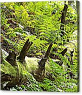 Carpet Of Ferns Acrylic Print