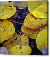 Carpet Of Gold Acrylic Print