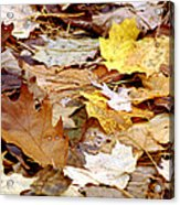 Carpet Of Leaves Acrylic Print