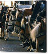 Carriage Horses Acrylic Print