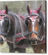 Carriage Horses Pleasure Pair Acrylic Print