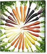 Carrot Pigmentation Variation Acrylic Print by Science Source