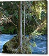 Cascade Rapids Acrylic Print