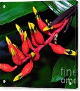 Cascading Color Acrylic Print