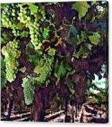 Cascading Grapes Acrylic Print