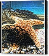 Castaways 02 Acrylic Print