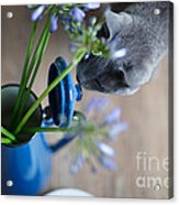 Cat And Flowers Acrylic Print