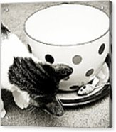 Cat And Mouse Coffee Acrylic Print