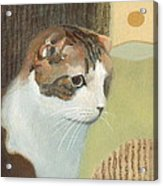Cat And Sunset Acrylic Print