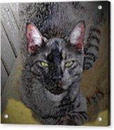 Cat Art Of Relaxing Acrylic Print