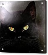 Cat Behind A Rain Spattered Window Acrylic Print