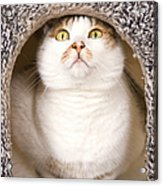 Cat From Cats House Acrylic Print