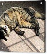 Cat Got Your Tongue Acrylic Print