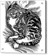 Cat Grooming Its Fur, Artwork Acrylic Print by Bill Sanderson