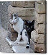 Cat Guardians Acrylic Print