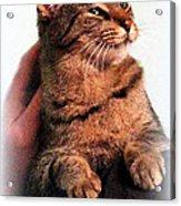 Cat Heaven Acrylic Print