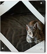 Cat In A Frame Acrylic Print