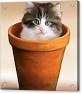 Cat In A Pot Acrylic Print