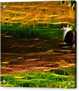 Cat In A Strange Place Acrylic Print