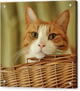 Cat In Box Acrylic Print