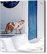 Cat In Mykonos Acrylic Print