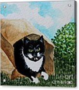 Cat In The Bag Acrylic Print