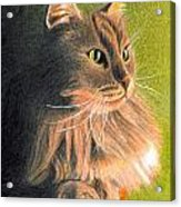 Cat Miniature Acrylic Print