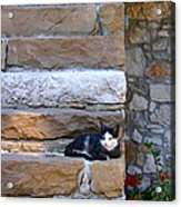 Cat On Stairs Acrylic Print