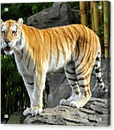 Cat On The Rocks Acrylic Print