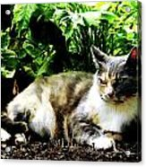Cat Relaxing In Garden Acrylic Print