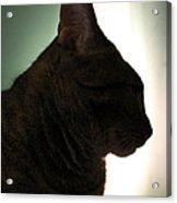 Cat Silhouette Acrylic Print by Nina Mirhabibi