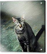 Cat Sitting On Floor Acrylic Print by Raj's Photography