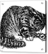 Cat-tabby-posters-1 Acrylic Print