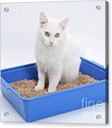 Cat Using Litter Tray Acrylic Print