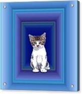 Cat Waiting Acrylic Print