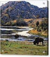 Catalina Buffalo  SOLD Acrylic Print