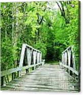 Catalpa Plantation Bridge Acrylic Print