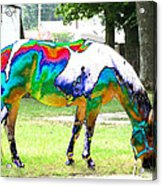 Catch A Painted Pony Acrylic Print