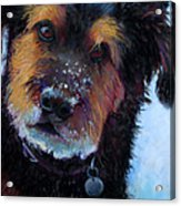 Catching Snowballs Acrylic Print by Billie Colson
