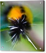 Caterpillar In Abstract Acrylic Print