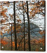 Cathedral Of Trees Acrylic Print