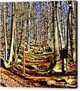 Catoctin Trail Acrylic Print