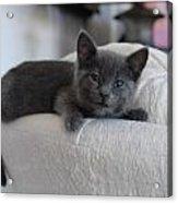 Cats 32 Acrylic Print by Joyce StJames