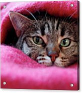 Cat's Den Acrylic Print by Christian JACQUET
