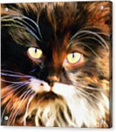 Cats Eyes Acrylic Print by Clare VanderVeen