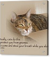 Cats Protecting You From Gnomes - Lily The Cat Acrylic Print