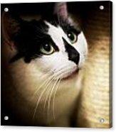 Catsablanca Acrylic Print