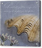Catspaw Seashell Acrylic Print