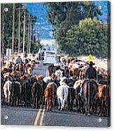 Cattle Drive 3 Acrylic Print